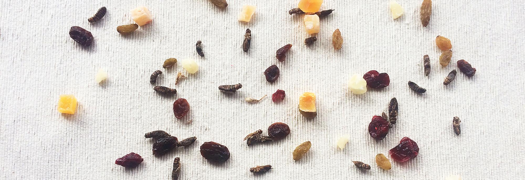 日本昆虫食協会  Japan Edible Insects Association